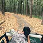Jungle safari in jim corbett